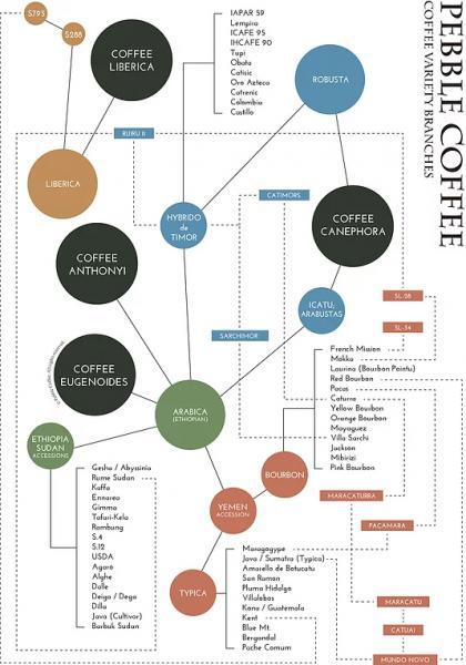Navn:  coffee-variety-map.jpg Visninger: 52 Størrelse:  44,4 KB